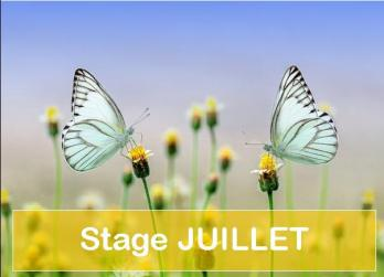 Stage juillet a 2