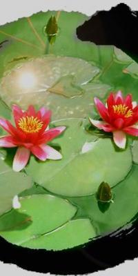 Lotusclair